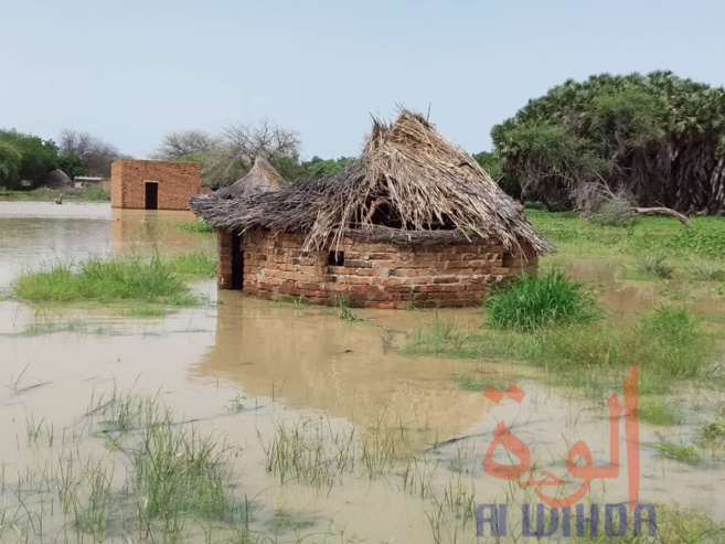Tchad : des sinistrés et des maisons englouties à Ati suite à la crue du fleuve Batha. ©Hassan Djidda Hassan/Alwihda Info