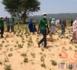 Tchad : au Sila, Concern Worldwide plante un millier d'arbres pour freiner la désertification