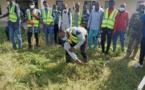 Tchad : le campus universitaire de Toukra nettoyé par des jeunes