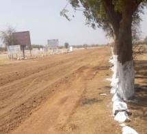 Tchad : le Guéra lance sa semaine de l'arbre pour lutter contre la désertification