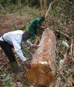 Vers la suspension des activités de la société forestière FIPCAM ?