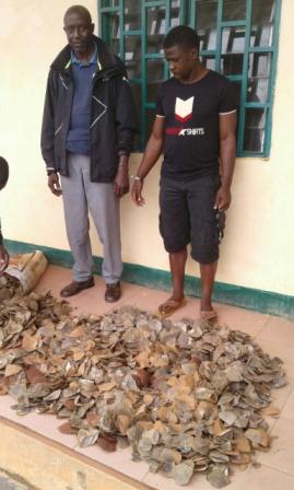 Les écailles de pangolins sont devenues un produit de choix pour les trafiquants.