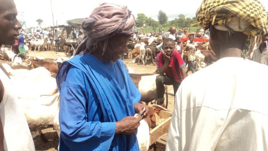 Côte d'Ivoire / Fête de Tabaski : Les prix des moutons en hausse sur les marchés
