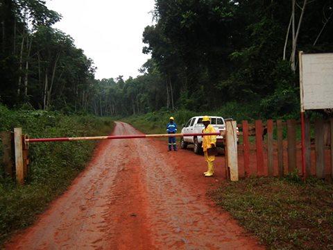 Cameroun:Vers une suspension temporaire des activités de la société forestière Fipcam
