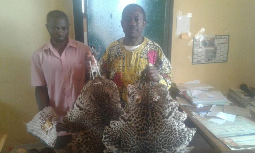 Cameroun/Dschang : deux trafiquants fauniques aux arrêts