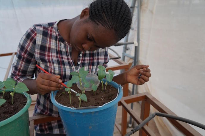 Candidate Ideas Matter Gloria Tetteh-Kubi, Université de Cape Coast - Ghana, étudie les mesures visant à réduire l' utilisation généralisée de pesticides pour la culture du niébé, contribuant ainsi à diminuer la pauvreté, à la sécurité alimentaire et à la conservation de la biodiversité. Crédit photo Frederick Awuku