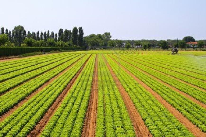 L'Agriculture Au Senegal. Crédits : Sources