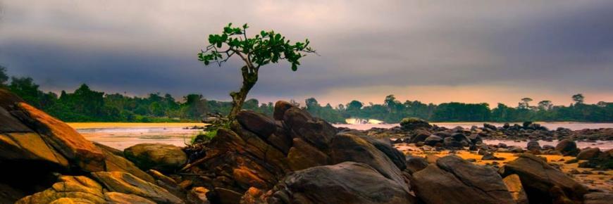 Cameroun:Lancement de la première agence digitale d'informations