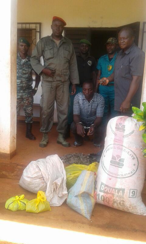 Le trafiquant arrêté à Messamena.