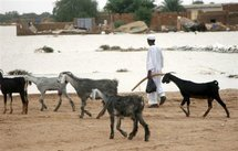 Un berger soudanais avec son troupeau de chèvres au sud de Khartoum, le 25 août 2006