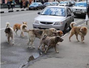 Insalubrité et insécurité dans les villes algériennes, notamment à Oran