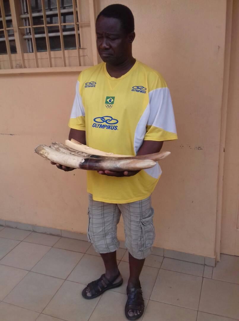 Un ex-marin arrêté en possession de 4 pointes d'ivoire dont un sculpté.
