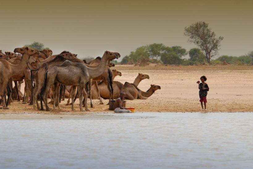 Des animaux au parc de Zakouma. Crédits photo : sources