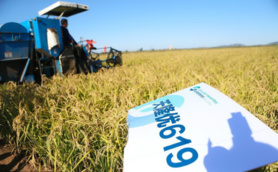 China's new rice variety catches global attention