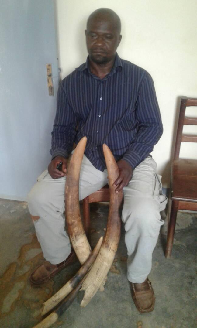 Une relation étroite entre les trafics d'ivoire et de pangolins.