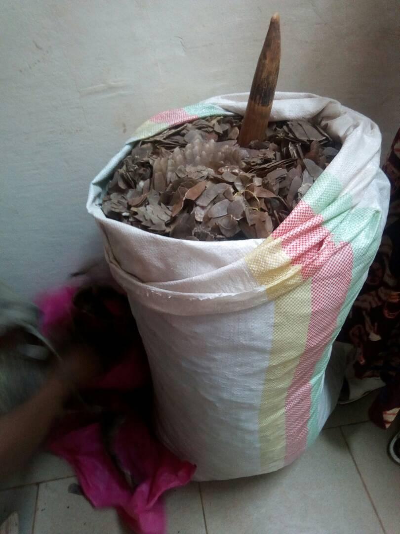 Selon les statistiques de ces deux dernières années, plus de 7000 kg d'écailles de pangolins ont été saisis.