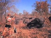 Un braconnier tire sur un éléphant.