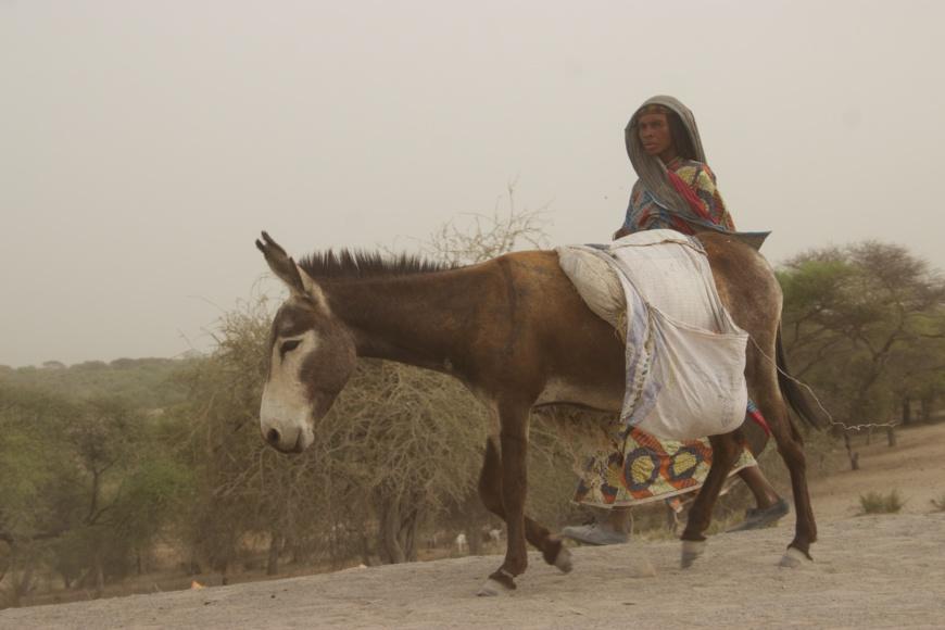 Une femme marche derrière un âne au Lac Tchad.
