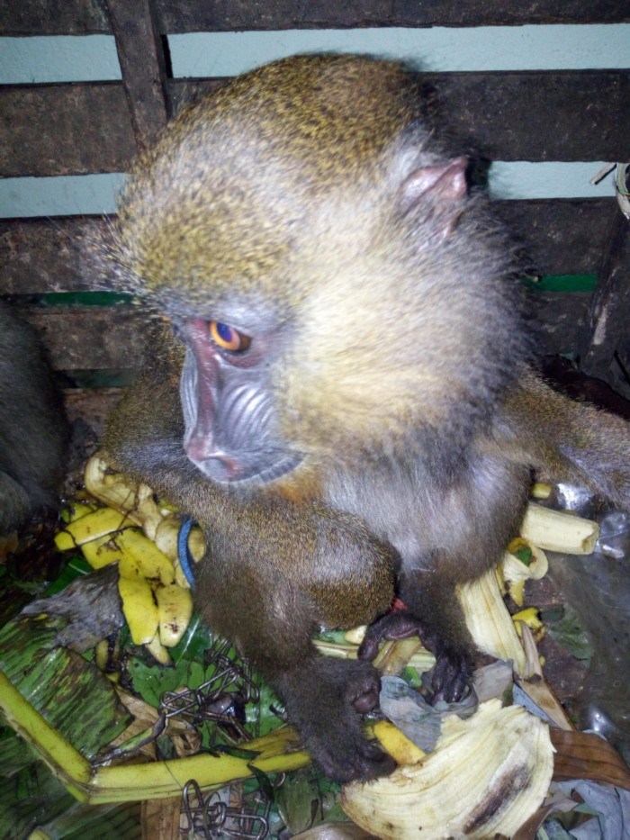 Des mesures doivent être prises pour permettre à ces espèces de survivre dans la nature.