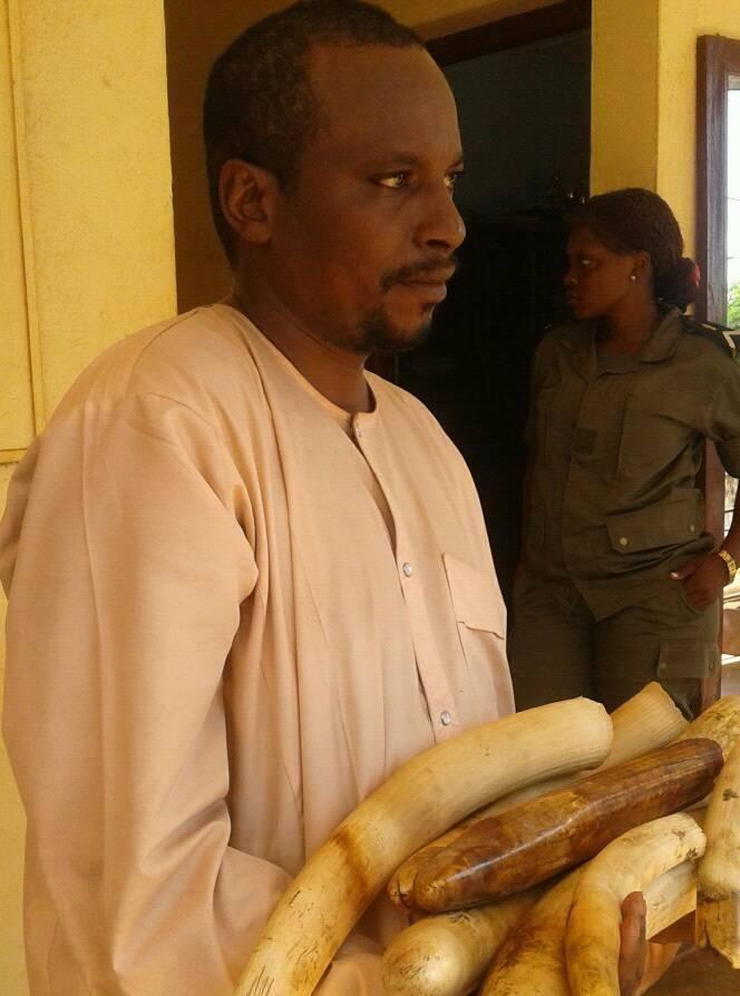 Le gouvernement du Cameroun travail dur pour démanteler le commerce illégal de l'ivoire.