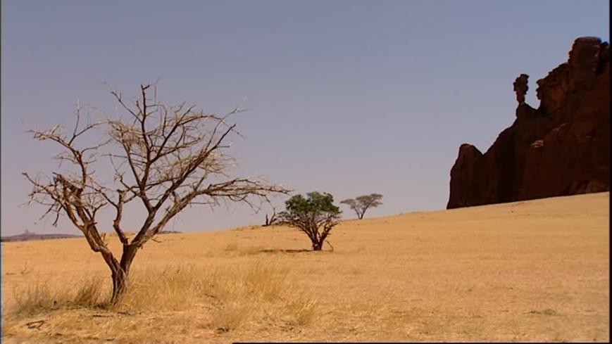 Le Tchad et le CORAF s'engagent à promouvoir les technologies intelligentes face au climat