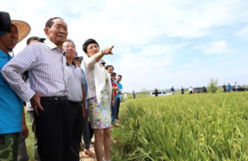 File Photo: Yuan Longping inspects on saltwater rice planting in Shandong Province, China (Photo: VCG)