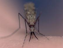 Comment faire pour briser la résistance  des vecteurs de paludisme ?