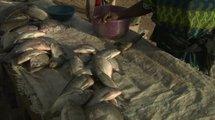 Tchad: Le prix du poisson a-t-il baissé ?