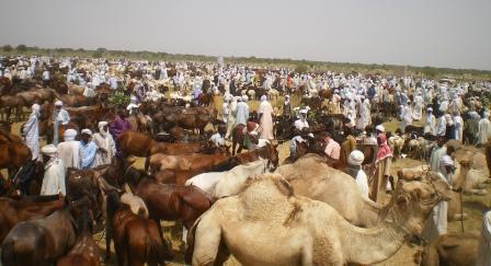 Crédits photo : plateforme-pastorale-tchad.org