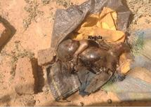 Le cadavre d'un bébé retrouvé dans un sac en plastique déchiqueté en partie par des chiens