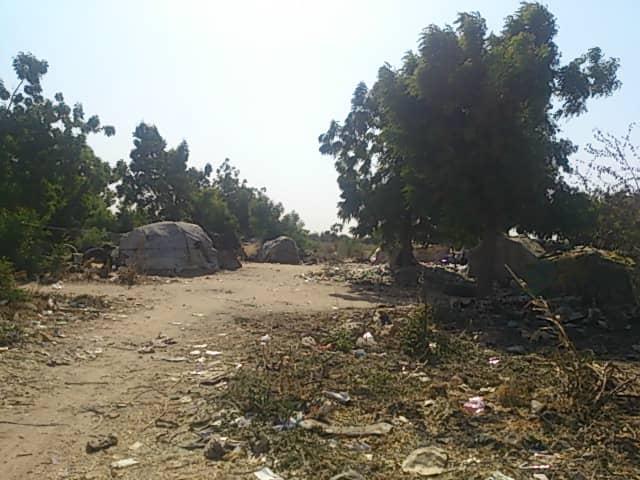 Un espace urbain semi-forestier derrière le Palais du 15 janvier. © Alwihda Info