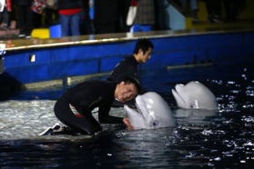 After Living in China for 15 years, Beluga whales will start journey back to Iceland