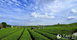 China will help farmers to build up modern agriculture