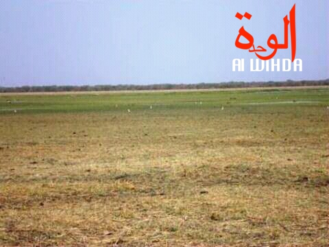 La plaine de Gara. Alwihda Info/M.A.