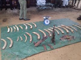 Tchad : un commandant se déguise en client pour arrêter des braconniers. © DR/Ministère EEP