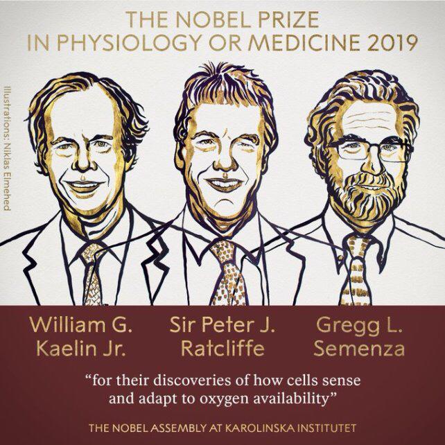 Nobel 2019 : les lauréats du prix de physiologie ou médecine