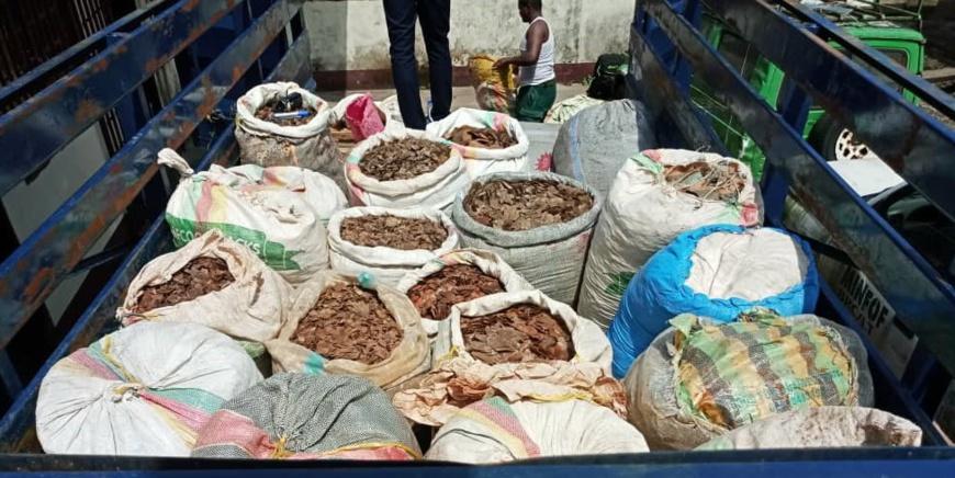 Des enquêtes antérieures ont montré que les écailles se dirigeaient vers le Nigéria.