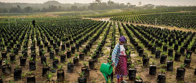 Des terres agricoles en Afrique. © DR