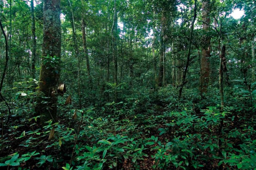 Côte d'Ivoire/Gestion des ressources naturelles : Un inventaire forestier et faunique en cours pour l'évaluation des politiques publiques