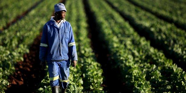 Le ministre BATAKA ambitionne de former 1000 entrepreneurs agricoles dans les 117 communes du Togo. © Reuters