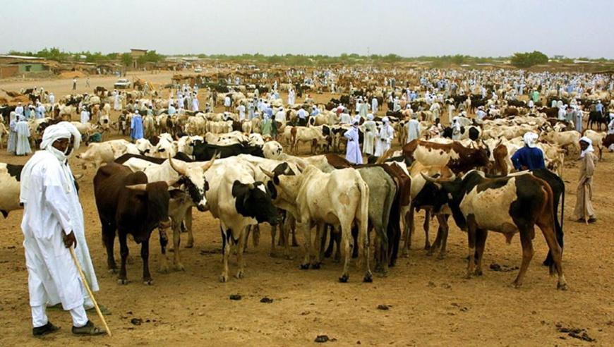 Des éleveurs de bétail, au Tchad AFP PHOTO DESIREY MINKOH
