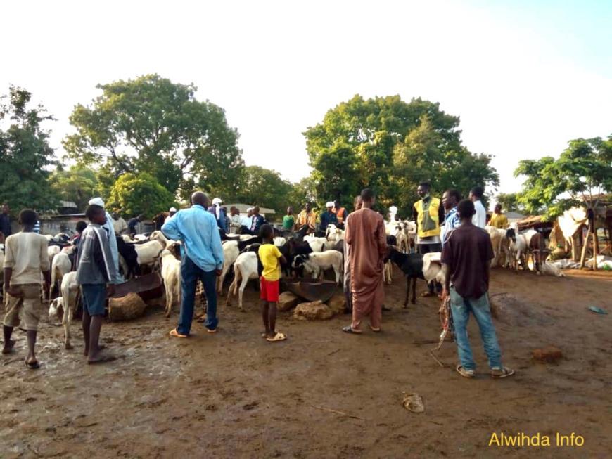 Une vente de moutons le dimanche 24 mai 2020 à Moundou pour la fête de l'Aid El-Fitr. © Golmen Ali/Alwihda Info