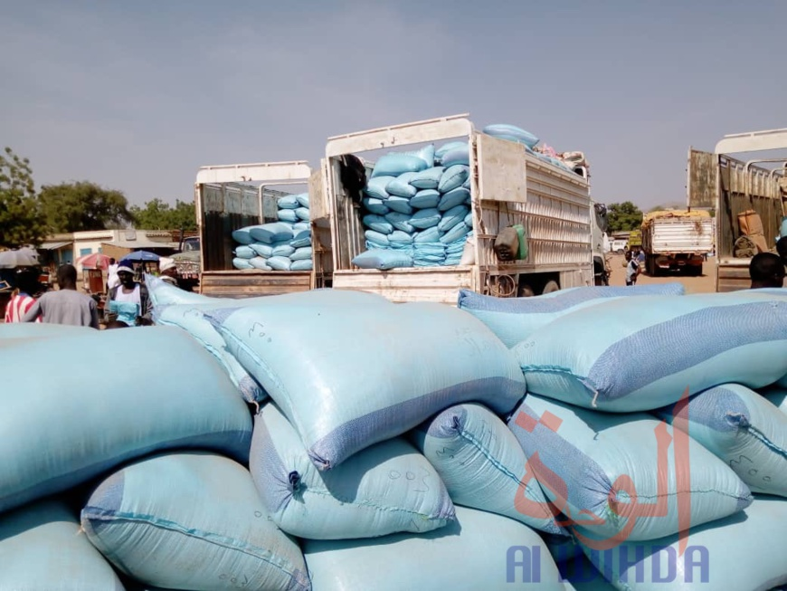 Tchad : à l'Est, le sésame s'exporte jusqu'au Soudan. © Mahamat Issa Gadaya/Alwihda Info