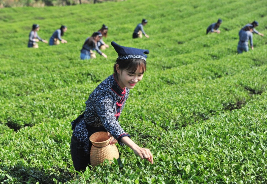 Villagers pick tea leaves at a tea garden in Feili township, Langxi county, Xuancheng, east China's Anhui province, May 17, 2020. Yang Jianzheng, People's Daily Online