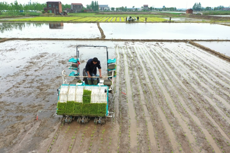 A farmer transplants early rice with a rice transplanter in Renhe village, Xiaodukou town, Lixian county, Hunan province on April 22. Photo by Bai Yipu/ People's Daily Online