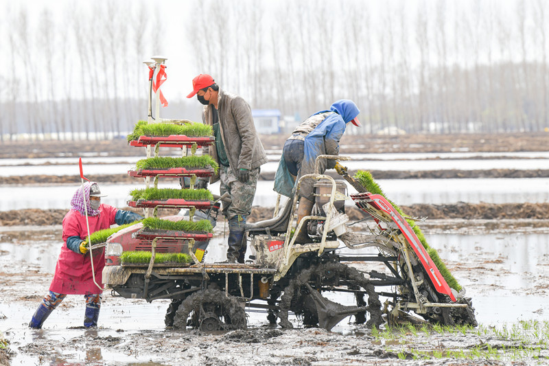 Farmers place rice seedlings on a smart autopilot transplanting machine guided by the BeiDou Navigation Satellite System in northeast China's Heilongjiang province, May 3. (People's Daily Online/Liu Shuaiye)