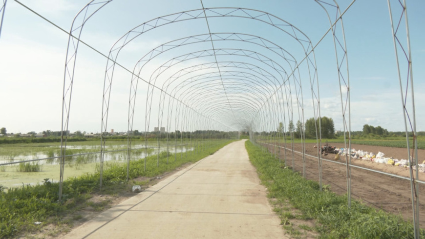 Photo shows a 300-meter ecological sightseeing corridor of Manjianghong village. (Photo/WeChat account of the publicity department of CPC Tieli municipal committee)