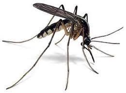 Manifestation contre des moustiques, le printemps arabe à l'envers