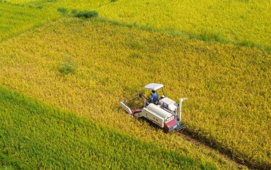 Farmers gather grain with a harvester at Taiping village, Quanzhou, Southeast China's Fujian Province on July 20. Photo by Kang Qingping/People's Daily Online