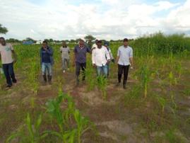 Tchad : Les jeunes s'investissent dans l'agriculture et relèvent les défis